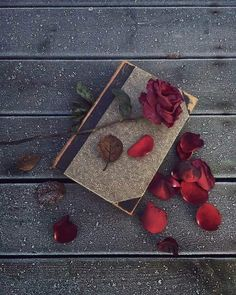 I will not disturb the memory. He fell asleep, let him be silent. But the heart believes in miracle, it hurts me. Flower Backgrounds, Wallpaper Backgrounds, Iphone Wallpaper, Flower Wallpaper, Nature Wallpaper, Book Photography, Creative Photography, Beautiful Rose Flowers, Book Flowers
