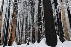 'Forest thru the Trees' by Donald Sewell on Capture Inland Northwest // Final look at a densely forested area devastated by the 2015 Kaniksu Complex Wildfire. Even in death, there is beauty. Print ID Death, Trees, Home Decor Trees, Wood, Plant