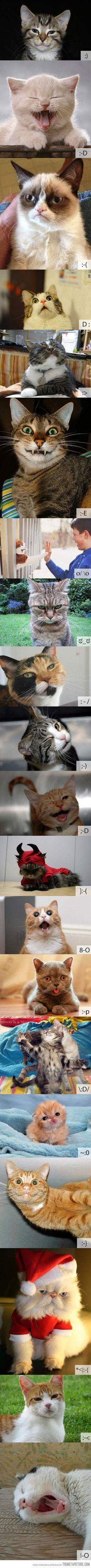 funny cat photos emoticons