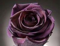 rosa stabilizzata.....da fare sui fiori del bouquete perché duri di più