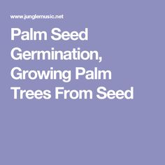 Palm Seed Germination, Growing Palm Trees From Seed