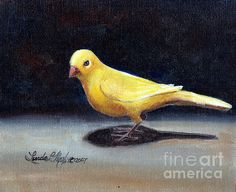 This wonderful little canary painting is 8 by 10 and is available for purchase.