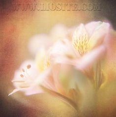 """Letta da Lorenzo Pieri una poesia di Alda Merini. """"Lungo il tempo infinito della Grecia quando concesso era il paradiso alle fanciulle in tèpidi giardini ...... """"  #AldaMerini, #poesiarecitata, #audiopoesia, #poesiaitaliana, #liosite, #citazioniItaliane, #frasibelle, #ItalianQuotes, #Sensodellavita, #perledisaggezza, #perledacondividere,"""