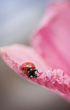 Pink Lady by Mirka Wolfova on 500px