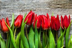 red tulips mothers day background