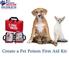 How to create your own Pet Poison First Aid Kit- be prepared in case of emergency.  #petfirstaid #petsafety #pethealth #pet #firstaid  #cat #dog #firstaidkit  http://www.petpoisonhelpline.com/pet-owners/basics/pet-poison-first-aid-kit/