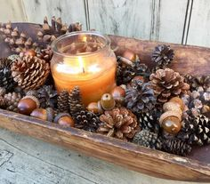 Box of assorted Pinecones and acorns, 100+, for crafts and decor. Free shipping.