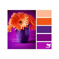 The Wedding! / oranges and purples ❤ liked on Polyvore