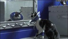 """<b>""""O que eu estava pensando mesmo?""""</b> --- esses gatos."""