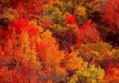 Osservare i colori della natura...l'effetto che vi può dare un bosco in autunno, con il suo bel foliage che va dall'arancio al giallo è un'idea di come potrebbe essere il vostro studio, ricercando un effetto armonioso ed allegro. L'accostamento invece tra il verde brillante delle foglie e il frutto della melanzana può guidarci nella scelta di tendaggi o per i tessuti dei cuscini da cui otterrete un risultato di grande effetto, eleganza e vivacità.
