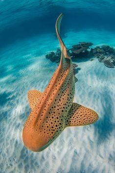 Wild Creatures, Ocean Creatures, Cute Creatures, Underwater Creatures, Underwater World, Beautiful Sea Creatures, Animals Beautiful, Underwater Photography, Wildlife Photography