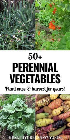 Forest Garden, Veg Garden, Edible Garden, Veggie Gardens, Garden Table, Vegetable Gardening, Perennial Vegetables, Planting Vegetables, Gardening For Beginners