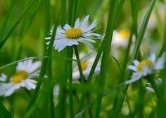 Summer secrets in the wind by evby http://ift.tt/1p5F5cs
