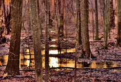Copyright 2013 Bruce Patrick Smith   In the forest, sunset fills the wooded scene with a glow, reflecting off of the puddles, and the colored skies.   Taken in North Chagrin Reservation of the Cleveland Metroparks.