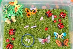 Bugs themed sensory bin.  *different types of bugs   big ladybugs as well as some small ladybugs,butterflies, & dragonflies   *tree   *rice green to make grass.        I put in some cups for scooping, pouring, and sorting.