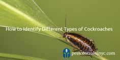 #NewJersey #Exterminator – Identifying Different Types of Cockroaches https://pestcontrolnjnyc.com/new-jersey-exterminator-identifying-different-types-of-cockroaches/