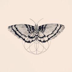 N°10 #Draw #Sketch #Tattoo #Tattooart #mothtattoo #moth #Geometry #line #Design #linework