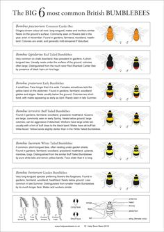 Bumblebee Identification Chart