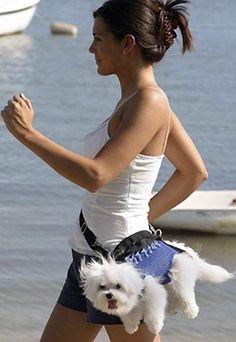 表情豊かすぎる犬たちの画像:ハムスター速報