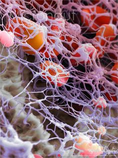 Human Blood Cells and Fibrin Network › Micronaut: The fine art of microscopy by science photographer Martin Oeggerli
