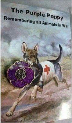 Resultado de imagen para remembrance day poppy for animals too