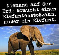 Niemand auf der Erde braucht einen Elefantenstoßzahn, außer ein Elefant. #zitat #zitate #spruch #sprüche #sprichwörter #worte #wahreworte #schöneworte