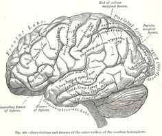 Knick of Time: Antique Graphics - {1893 Gray's Anatomy Illustrations}