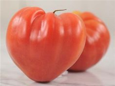 Pink Oxheart Tomato
