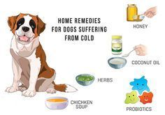 5 Home #Remedies For #Dogs Suffering From #Cold -