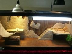 Bearded dragon habitat | Reptile Care this is really cool!