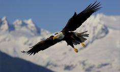 Las Aguilas vuelan solas! los ojetes en Parvada.......