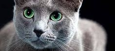 tierfotos tipps - Google-Suche Tier Fotos, Google, Animals, Inspiration, Cats, Nude Photography, Searching, Animales, Biblical Inspiration