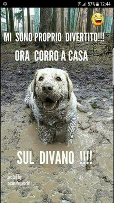 Monday's Cuteness: He Found A Puddle And Made The Most Of The Opportunity. Cute Cats And Dogs, I Love Dogs, Animals And Pets, Funny Animals, Cute Animals, Cane Corso, Funny Images, Best Funny Pictures, Intelligent Words
