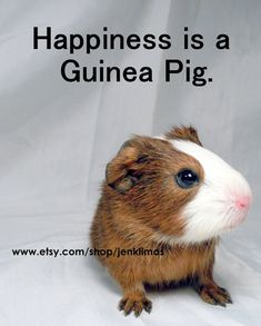 Newborn Baby Guinea Pig Photo Portrait - HAPPINESS is a GUINEA PIG on Etsy, $10.00