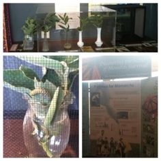Our butterfly exhibit from the special event.