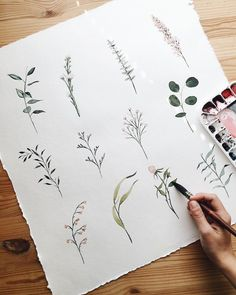 Watercolor Small Botanicals | Eucalyptus, Olive Branch, Rose Buds | Painting by Shealeen Louise