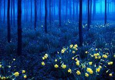 Самые прекрасные леса мира | Черный Лес ночью в Баден-Вюртембергском регионе, юго-запад Германии