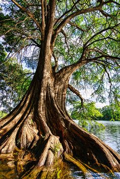 Texas - Ladybird Lake in Austin