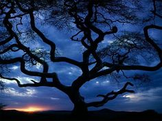Google Image Result for http://www.fabuloussavers.com/wallpapers/34_Tanzania_tree_sceniclandscapes_naturewallpaper_l.jpg