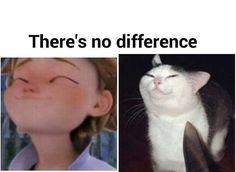 That's a purrfect comparison!!!