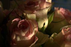 #rose #beautiful
