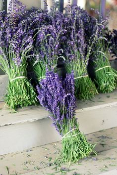 fresh cut #lavender bunches ready to be distilled into #essentialoils
