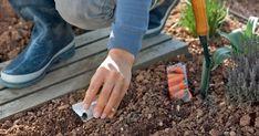 Sobald die Frühlingssonne den Boden erwärmt hat, können Sie die ersten Gemüsearten im Freiland aussäen.