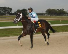 Brad Free: Tampa Bay Downs, Verrazano put on a show for visitor | Daily Racing Form