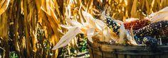How to Make Food Your Ally During Vata Season | Banyan Botanicals