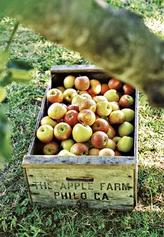 Apples. #countrylife #country