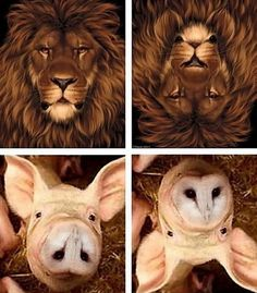 Lion Pig optical illusions