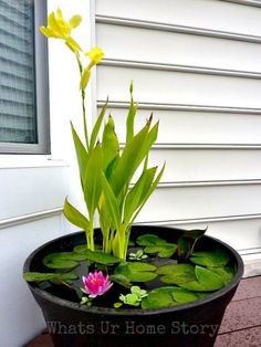 How to Set up Mini Water Gardens on Your Deck DIY Container Water Garden. Recommended plants: canna lilies, dwarf papyrus and taro (for height); water lilies or lotuses (their leaves will cover much of the water surface from sunlight, preventing algae gro Container Water Gardens, Container Gardening, Diy Container Pond, Small Water Gardens, Water Containers, Wooden Containers, Container Flowers, Mini Pond, Water Features In The Garden