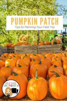Tips for Planning your Pumpkin Patch Field Trip.  Tips for Kindergarten, First Grade and Second Grade Teachers who are planning a field trip to pick pumpkins at a farm or Pumpkin Patch.