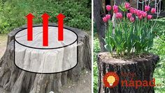 These planters turn an old tree stump into a planter garden. Try doing this as well instead of dealing with the hassle of a tree stump removal. Tree Stump Decor, Tree Stump Planter, Diy Garden Decor, Garden Art, Tree Stump Killer, Removing Tree Stumps, Wood Stumps, Strawberry Garden, Lawn And Landscape